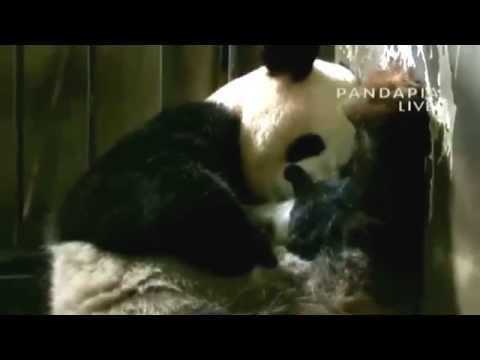 Panda Nursery[7]7.09.14