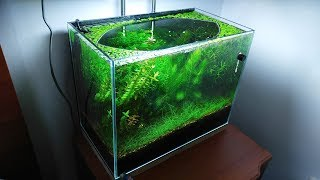 10 Months Update - (Melting Pot of Shrimps) NO filter, NO CO2, NO Ferts 5 Gallon Nano Tank