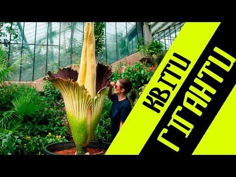 Самые большие растения в мире !!