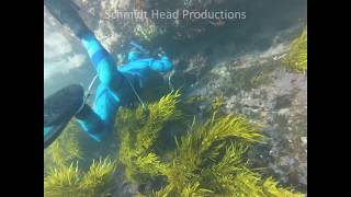 Spearfishing Windang Island