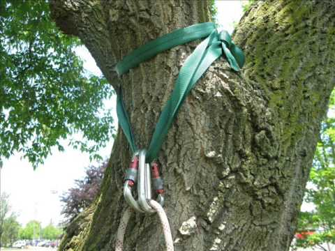 Tree Climbing Anchoring In The Tree Youtube