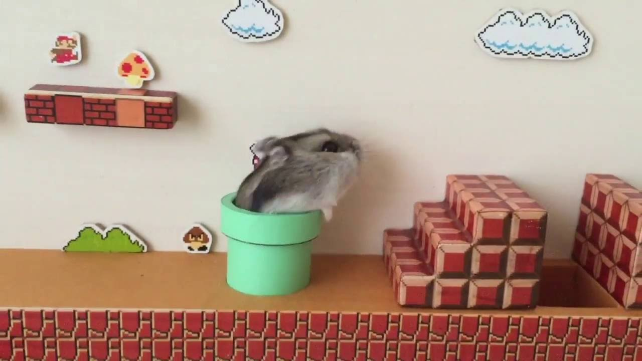 [Smart Hamster Beats Super Mario Bros Level With Ease] Video