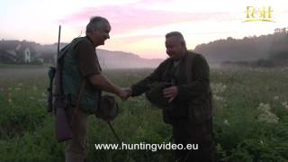Wild Boar And Roe Buck Hunting In Hungary (HD)