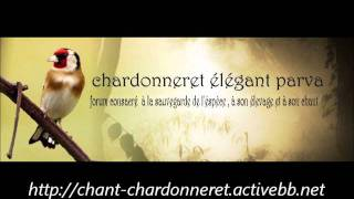 Chant Chardonneret Bois Descart   http://chant-chardonneret.activebb.net/
