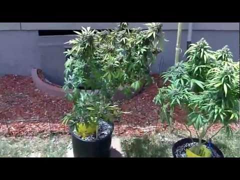 600 Watt Grow Tent  9