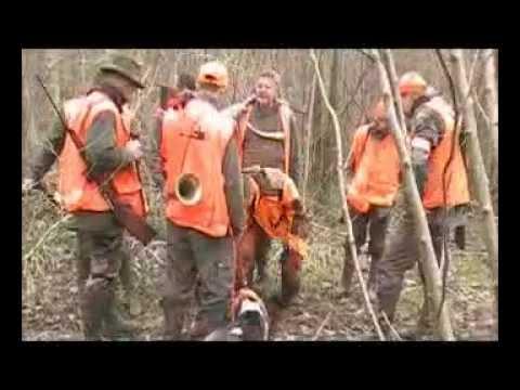 battue-au-sanglier-avec-fox-terrier-au-ferme-wmv.html