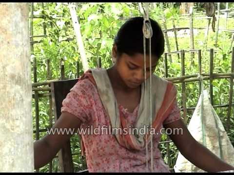 Assamese girl weaves a gamosa or gamocha thumbnail
