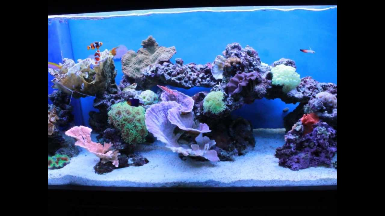 The Art Of Aquascaping Youtube