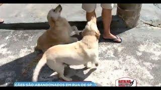 Cães são abandonados em rua de São Paulo