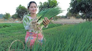 Harvesting Green Onion In Gardening For Cooking | Green Onion Recipe | Sros Yummy Cooking Vlogs