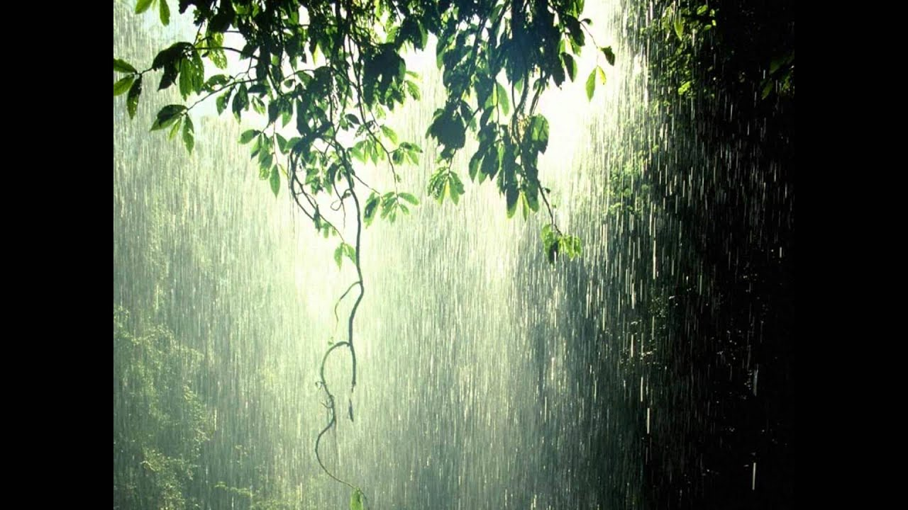Rain forest nature sounds youtube
