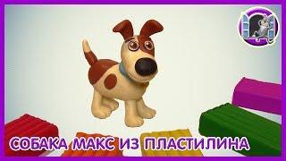Собака из пластилина Видео Лепка