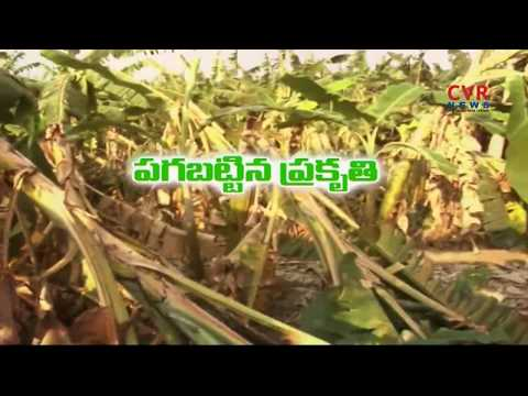 Banana Crops Damage With Unseasonal Rains In Srikakulam Dist | CVR News