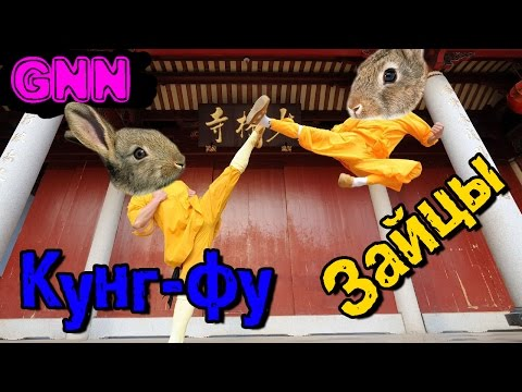 Два зайца-ли в игре Overgrowth