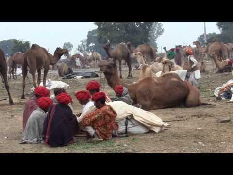 Trip to Rajasthan India: Jhalawar Cattle Fair