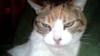 VIDEO WASAP (85) El Gato De La Aurori