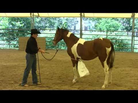 Day 6 - SCEA Rescue Horse - Desensitizing to Fly Spray & Spooky Objects