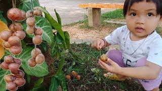 Trò chơi bé đi thu hoạch hoa quả và bóc ăn quả dâu da đất ❤Ngân hà TV❤