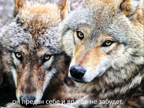 Лагерные песни - Волк-человек