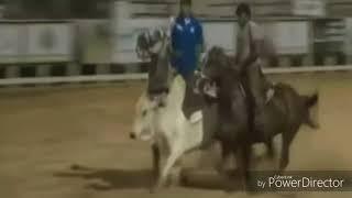 Wesley safadão - Manda boi (Clipe oficial)