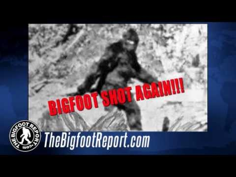 The Bigfoot Report - Bigfoot News #18 - Pennsylvania Bigfoot Shooting