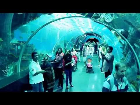 Amazing Aquarium Tunnel in Singapore of Asia