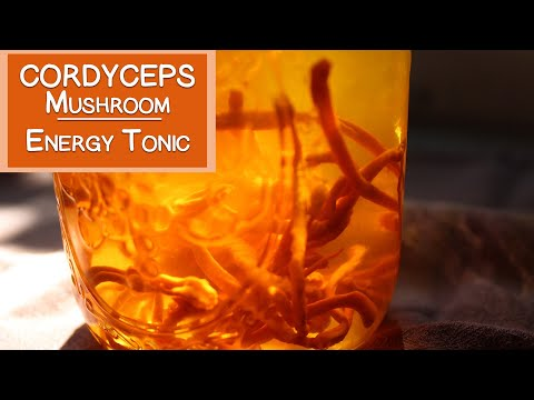 Cordyceps Mushroom Benefits as an Energy Tonic