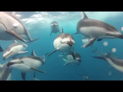 Namibia Dolphin Project