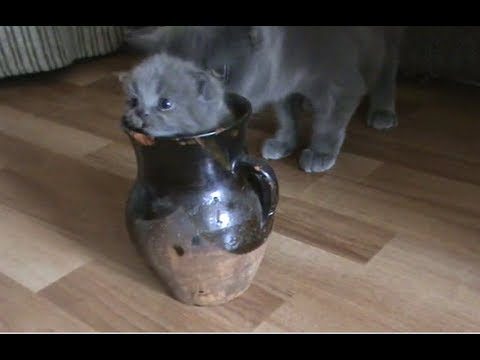 Cheezburger : Kitteh and the Jug