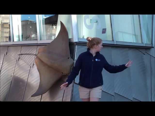 H2O - Frozen parody featuring the New England Aquarium