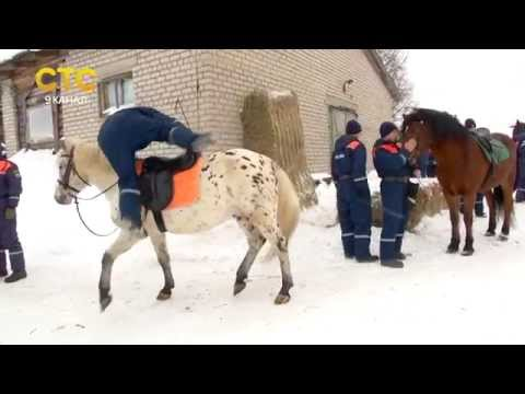 Занятия МЧС на лошадях