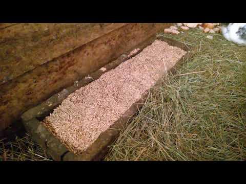 Содержание кроликов в сарае