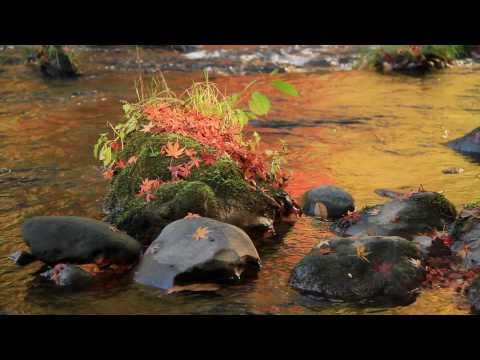 山中温泉 鶴仙渓の秋「光彩の章」Valley of autumn by Canon EOS 7D
