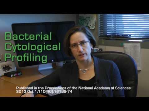 Bacterial Cytological Profiling Global Video Challenge