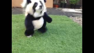 Pandaloon Puppy