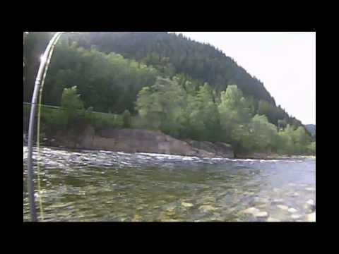 Gaula Fishing - Large Salmon in June 2011 on the NFC Beats