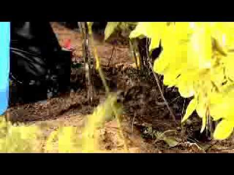 Omer Dadi Aur Ghar Wale Promo 01 video