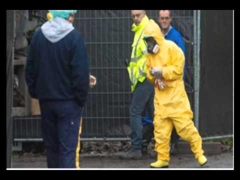 Highly contagious bird flu strain found at Dutch farm.
