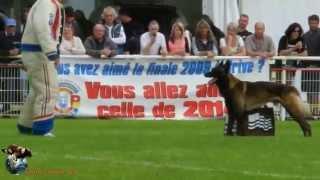 2013 finale Ring Quimperlé - ESPOIR DIT CABOTIN - DAVID Micheltin