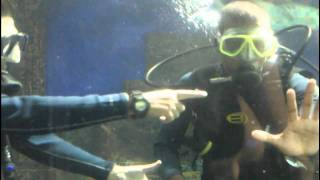 Scuba Diving in Singapore Underwater World