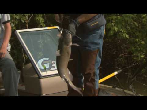 Canadian Sportfishing Float fishing for Channel catfish, Lake Erie Tributary ON Csf 23 25 01
