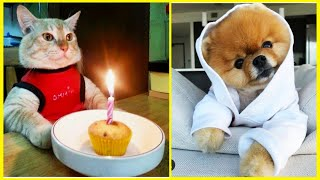 Funny Animals ⭐ Cute Cats and Dogs compilation #30 | Funny Boost