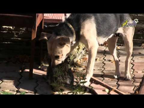 Кошки и собаки, дворняги, стаффорд - вопрос жизни и смерти / Dogs & Cats