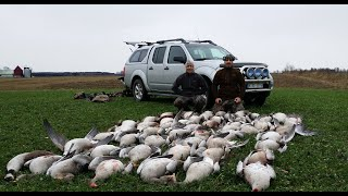 Goose Hunting in Sweden ( Gåsjakt ) ( Kaz avi isvec )  2015