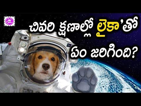 చివరి క్షణాల్లో Laika తో ఏం జరిగింది? The Sad Story of Laika First Dog in Space