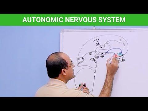 Autonomic Nervous System thumbnail