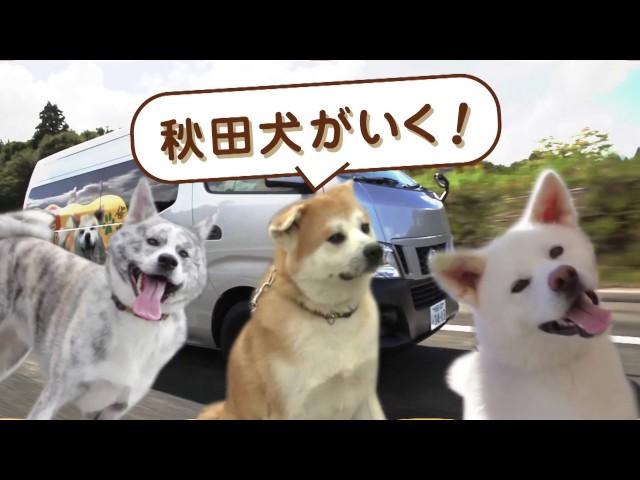 秋田犬がいく! わんダフル秋田