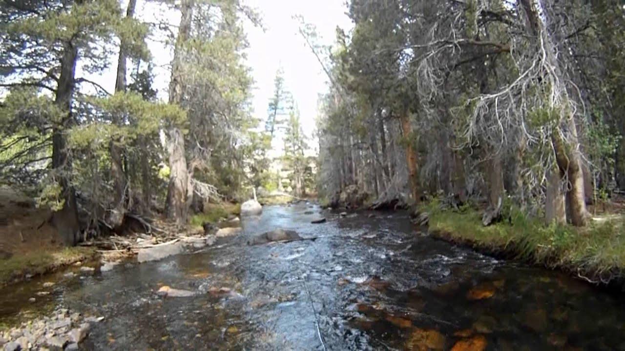Part ii california trip fly fishing eastern sierras youtube for Sierra fish in english