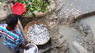 Best fish trap | Fish catching by homemade fish traps | How to make a fish trap for small fish
