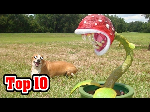 Top 10 DEADLY Plants NOT To Mess With!